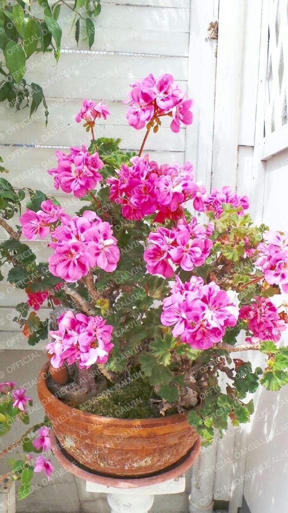 mon environnement de fleurs atelier alarcon alvin